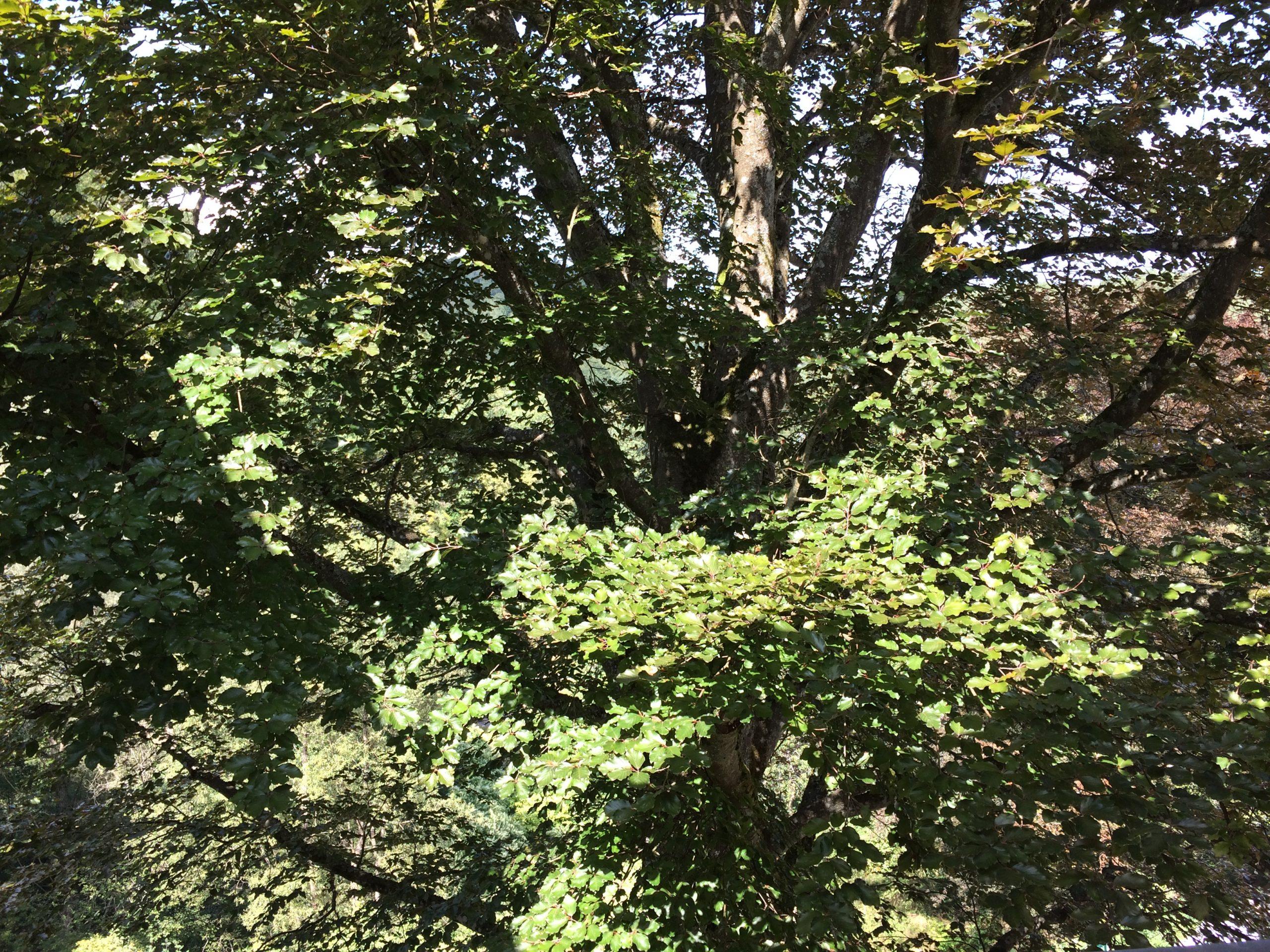 Wanderung und Meditation in der Natur